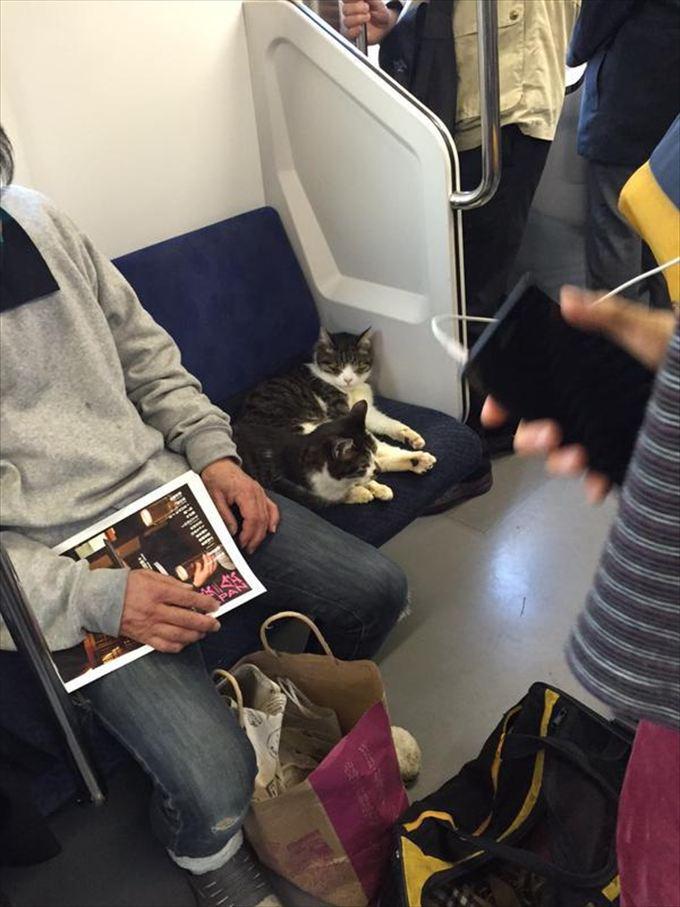猫おもしろ画像 37
