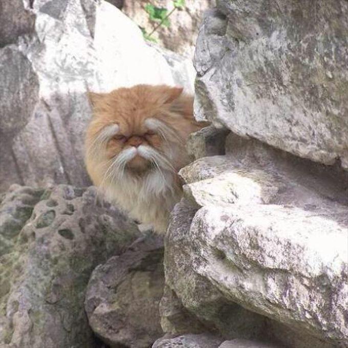 猫おもしろ画像 40