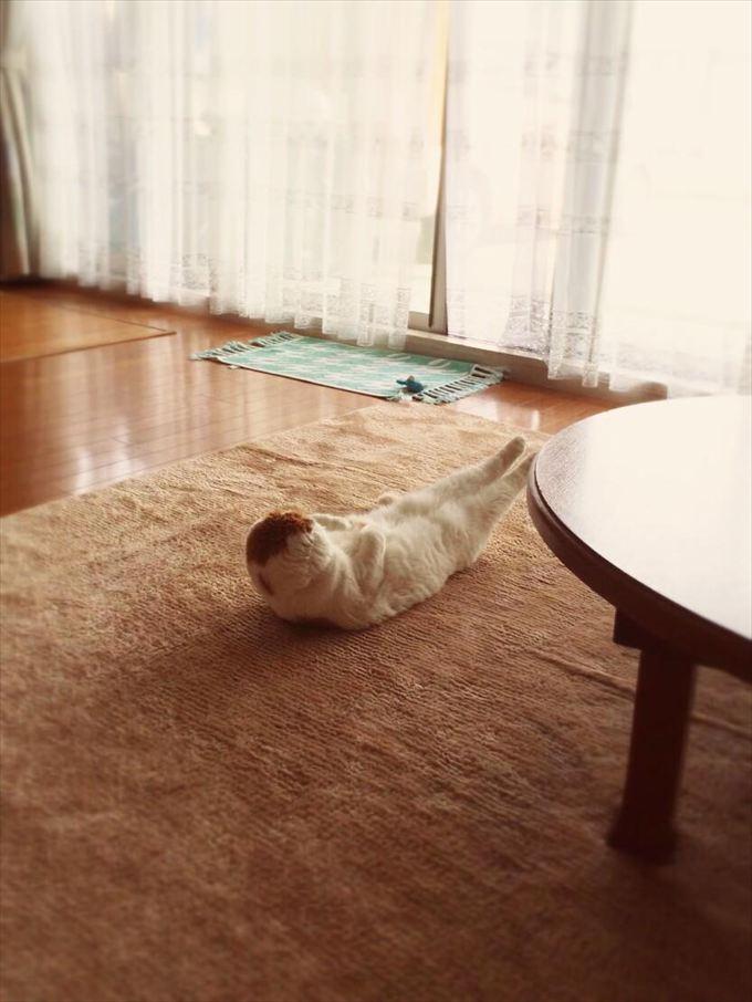猫おもしろ画像 43