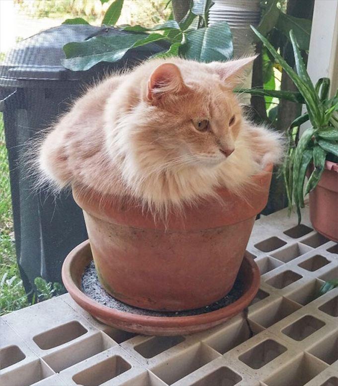 猫おもしろ画像 45