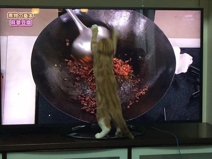 猫おもしろ画像 49