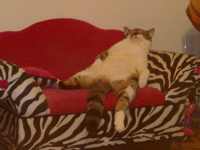 猫おもしろ画像 5
