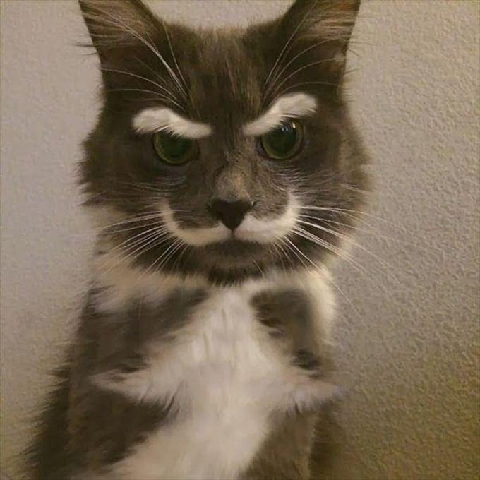 猫おもしろ画像 51