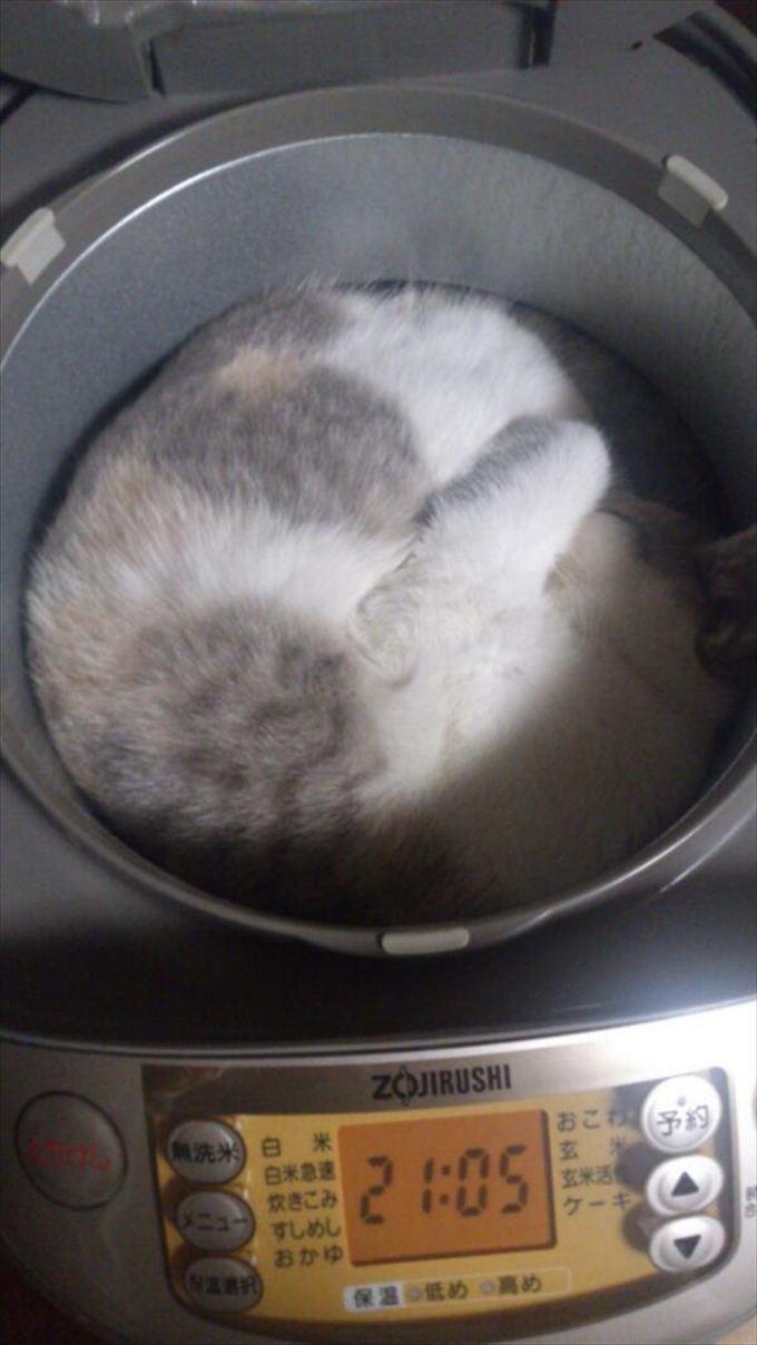 猫おもしろ画像 53