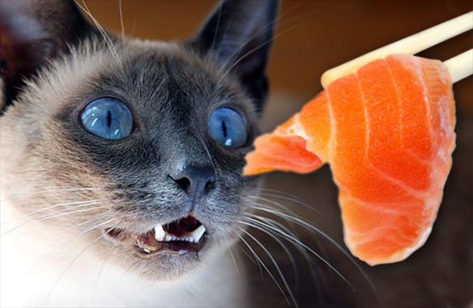 猫おもしろ画像 55