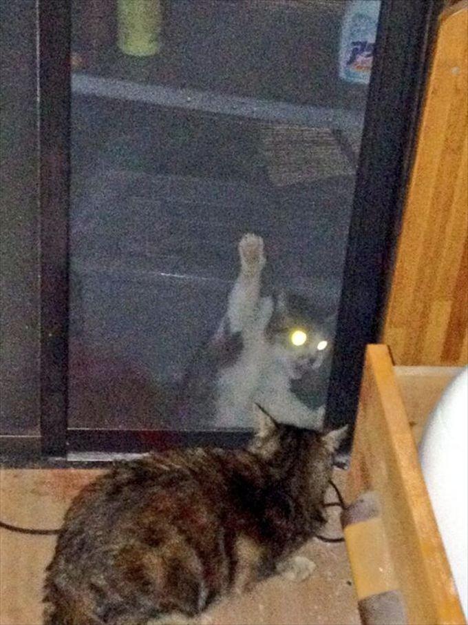 猫おもしろ画像 57