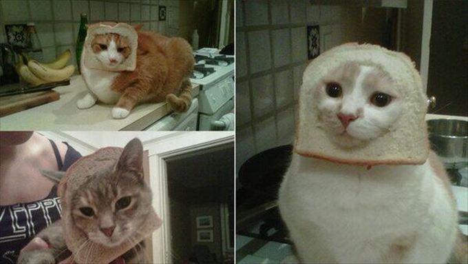 猫おもしろ画像 59