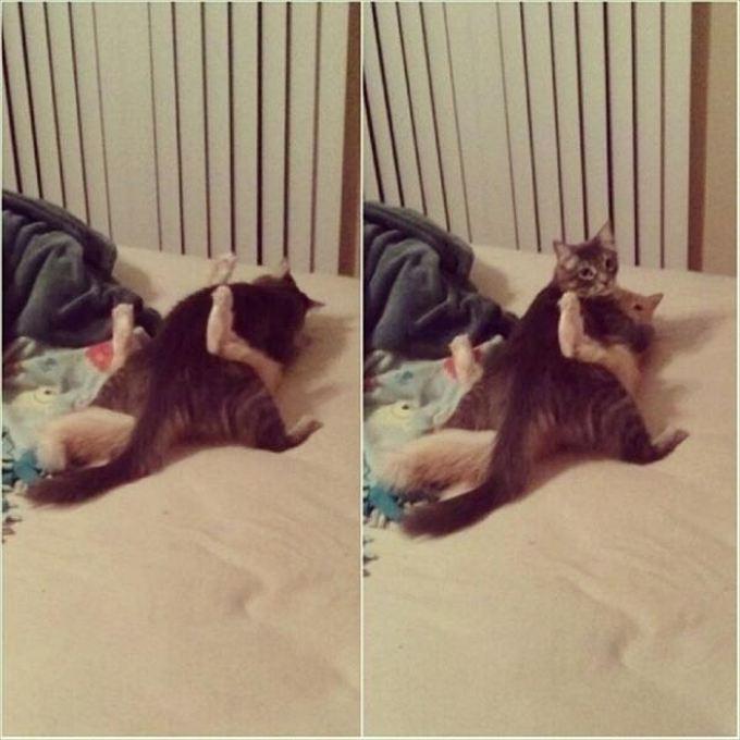 猫おもしろ画像 61