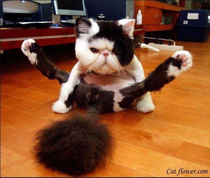 猫おもしろ画像 64