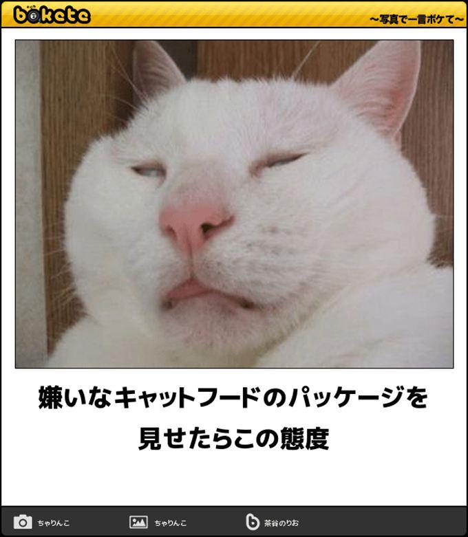猫おもしろ画像 65