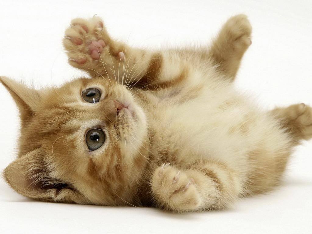 一度は見ておくべき 面白ネコの画像70選 Ailovei