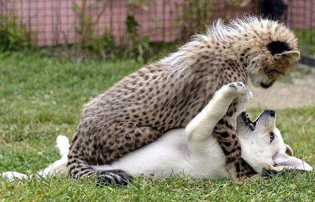 癒やし動物 101