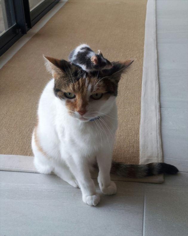 おもしろ猫 1