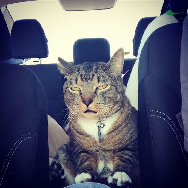 おもしろ猫 12