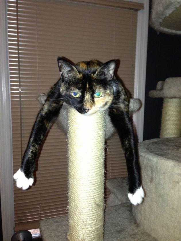 おもしろ猫 16