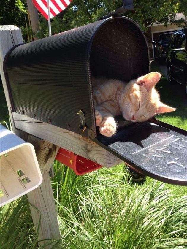 おもしろ猫 2