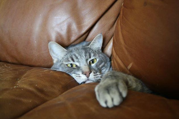 おもしろ猫 24