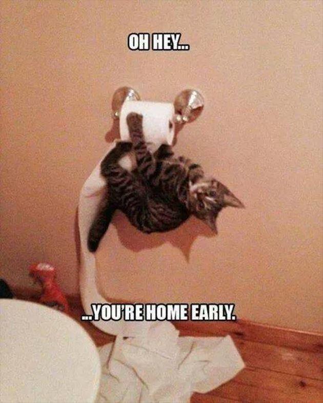 おもしろ猫 27