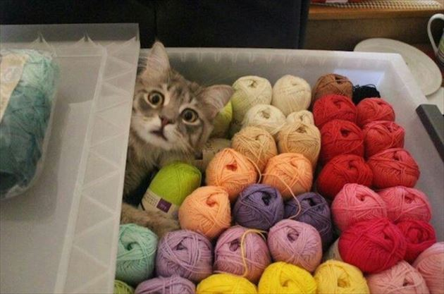 おもしろ猫 28