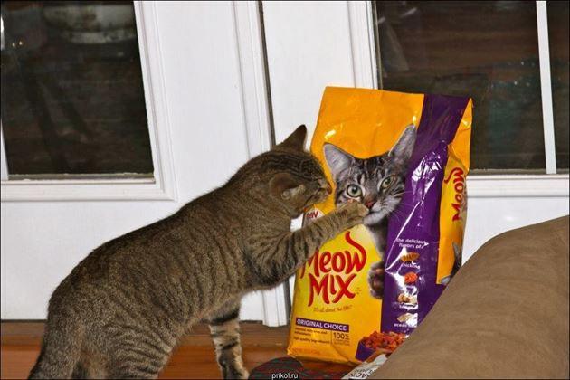 おもしろ猫 4