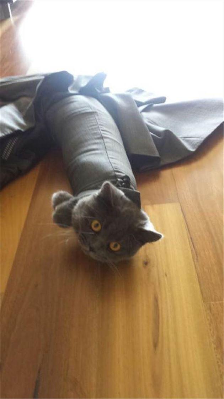 おもしろ猫 6