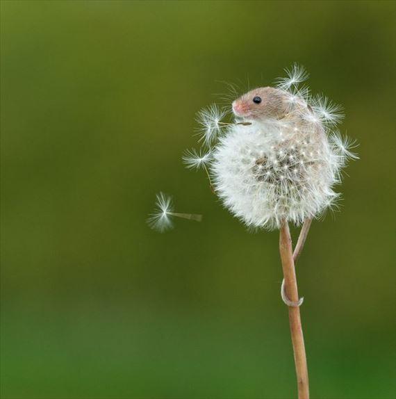 これはすごい!動物たちの決定的瞬間(画像) | ailovei