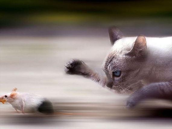 動物決定的瞬間 7