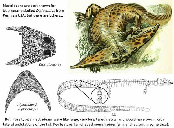 古代生物画像 10.0