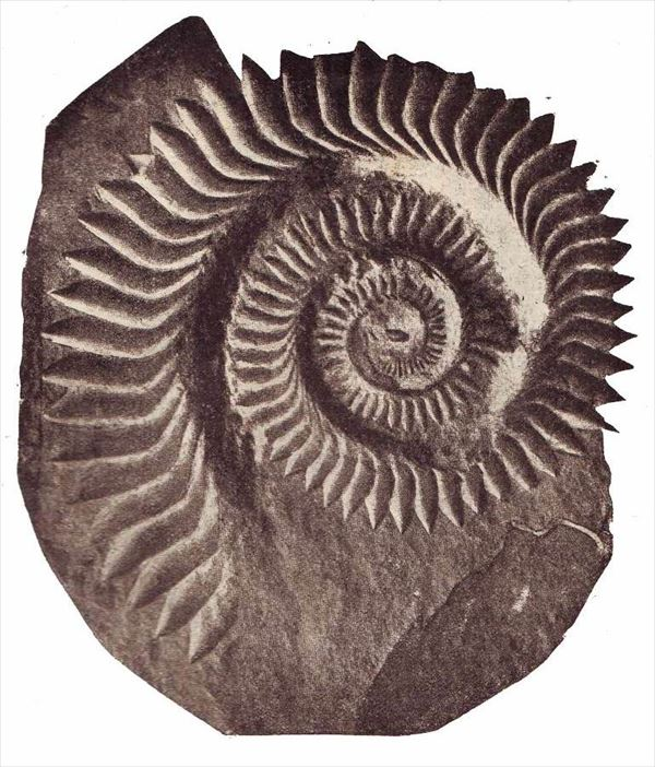 古代生物画像 11.1