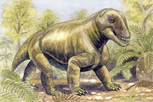 古代生物画像 12.0