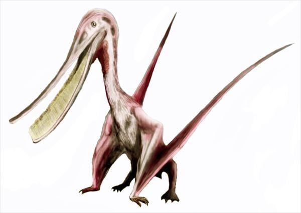 古代生物画像 16.0
