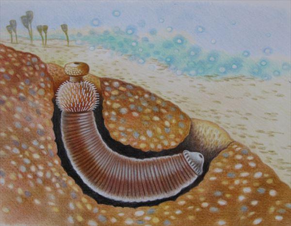 古代生物画像 2.0