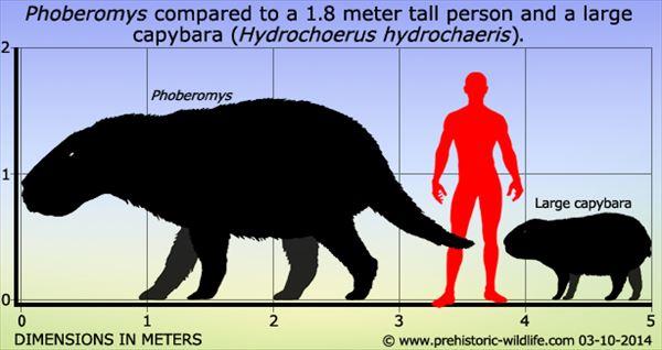 古代生物画像 21.1