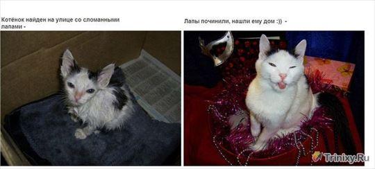 捨て犬、捨て猫 18.0