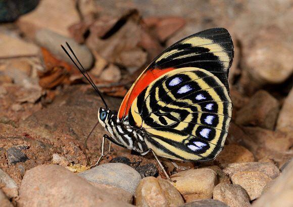 美しい蝶 1