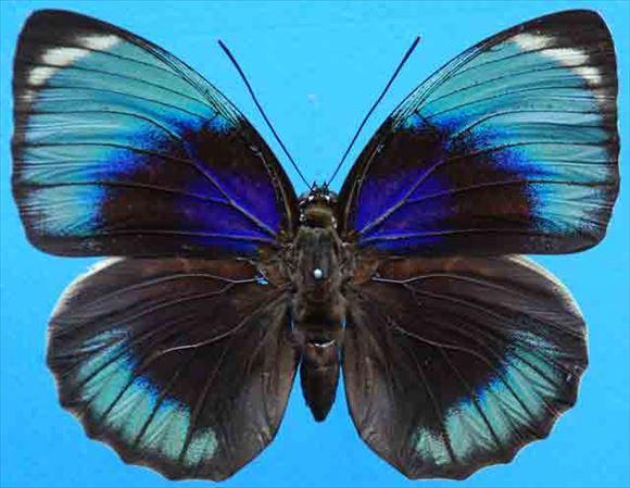 美しい蝶 2.0