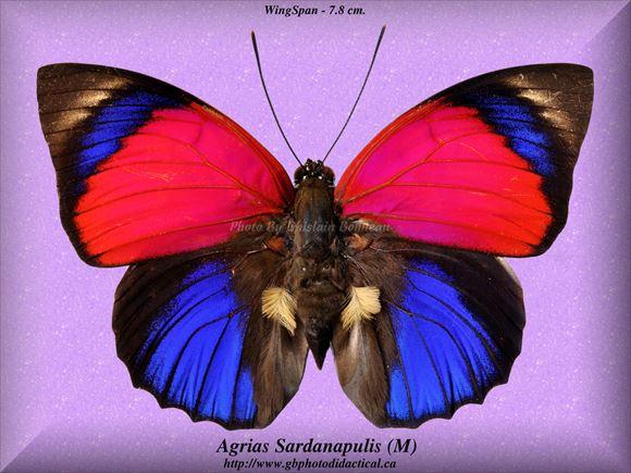 美しい蝶 4.0