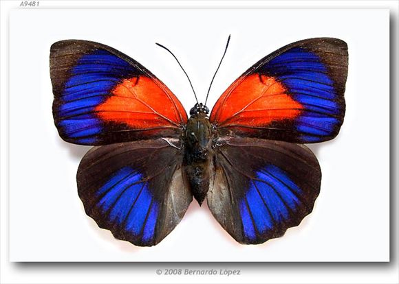 美しい蝶 5.0