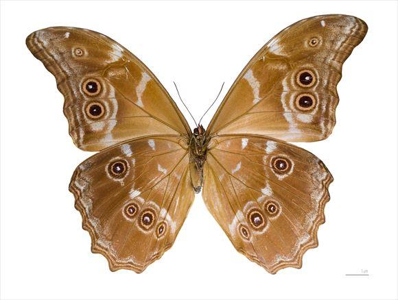 美しい蝶 6.1