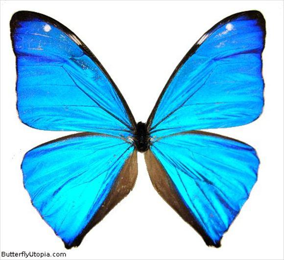 美しい蝶 9.0