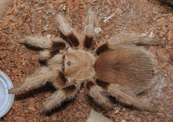 蜘蛛画像 27.0