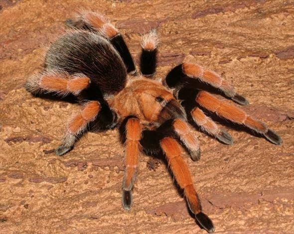 蜘蛛画像 28