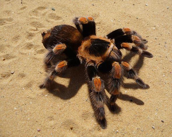 蜘蛛画像 30.0