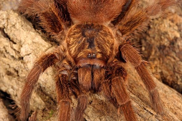 蜘蛛画像 36.0