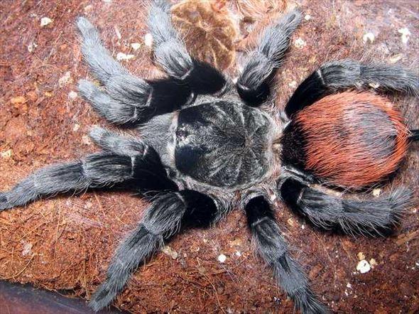 蜘蛛画像 39.0