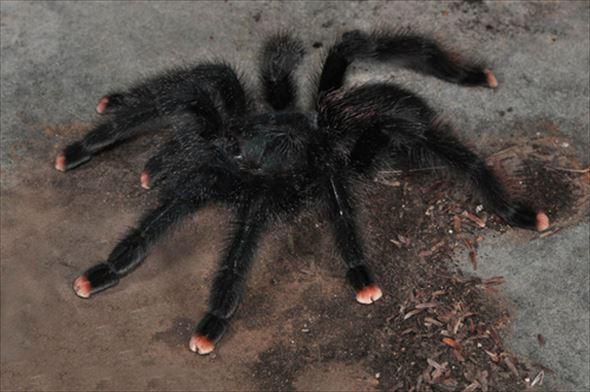 蜘蛛画像 41.0