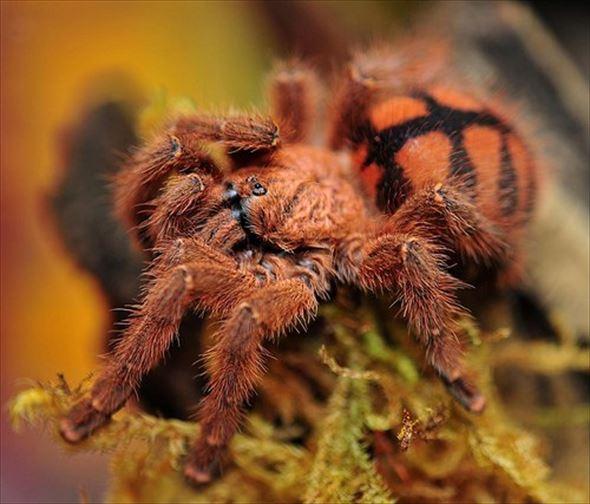 蜘蛛画像 42.0