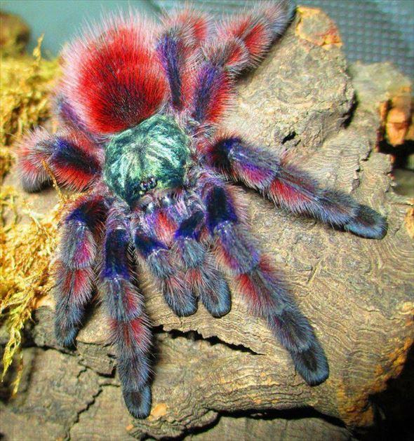 蜘蛛画像 45.0