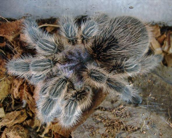 蜘蛛画像 52.0