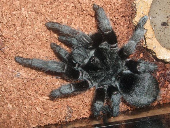 蜘蛛画像 53.1